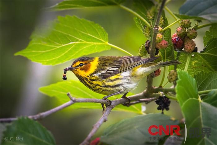 给大自然和热爱大自然的人当义工